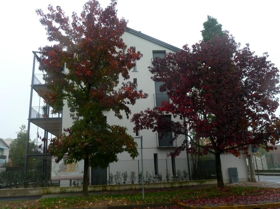 Bilocale Monza Via Calatafimi 27 3