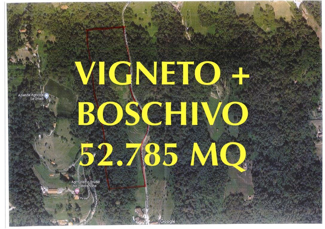 Vendita terreno agricolo Palazzago superficie 52785m2