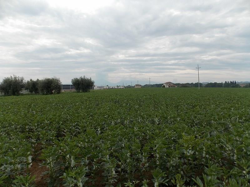 Vendesi terreno edificabile a Corropoli (TE)